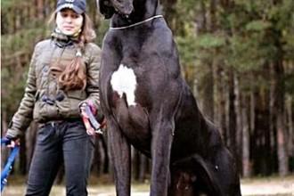 grandezza cane